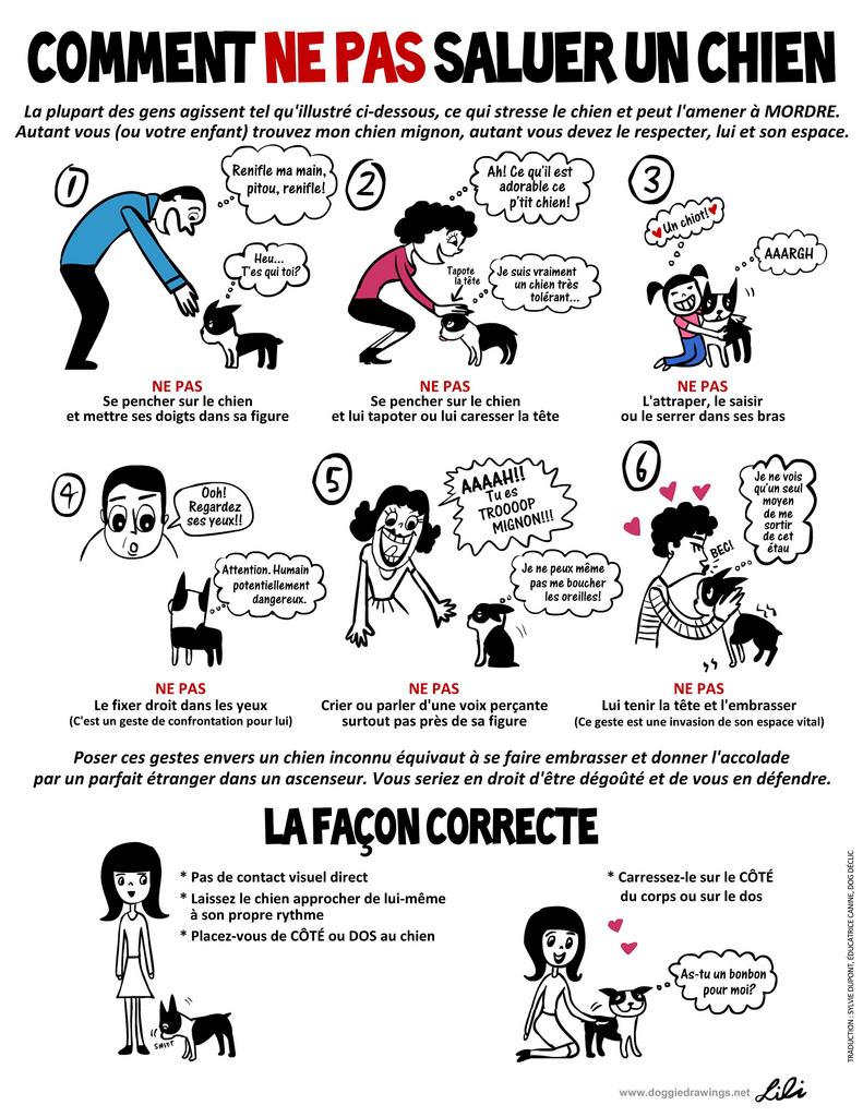 Ne pas saluer un chien: mode d'emploi Comment-ne-pas-saluer-un-chien