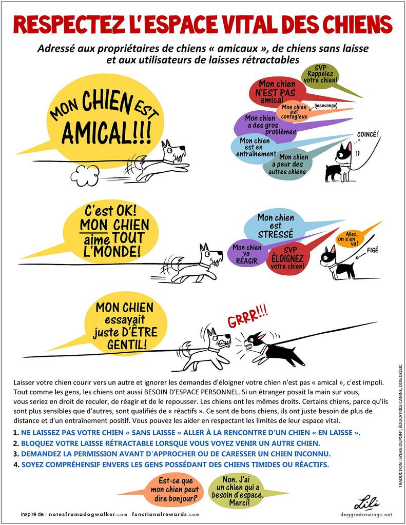"""Résultat de recherche d'images pour """"chien ruban jaune"""""""